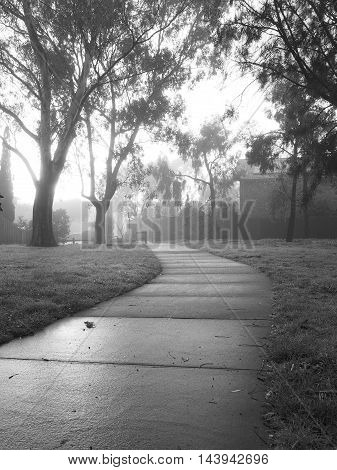 Creepy dark bike path with tree line and heavy fog black and white against the sun rise Melbourne Australia 2015