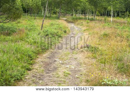 forest scenery including a footpath around Carnac a commune in the Morbihan department of Brittany France