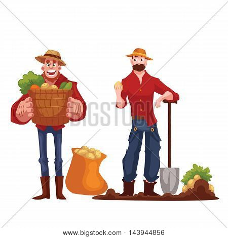 Man harvesting potato in the field, cartoon style vector illustration isolated on white background.