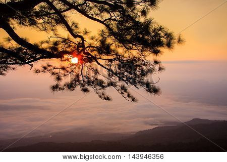 Wild twilight time at Phu Kradueng National Park Thailand