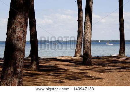 Lake Behind Some Trees With Pedal Boats And Sail Boats