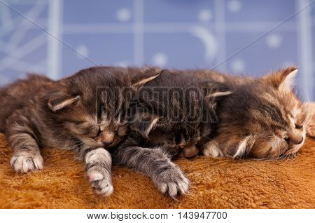 Asleep newborn kittens on a fur fabric over light-blue background