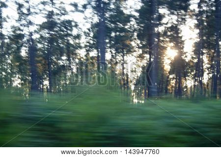 Something Speeding In A Forest With The Sun Behind