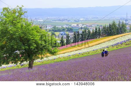 Lavender and colorful flower fields with tourists in the background at Tomita farm famous tourist attraction of Furano Hokkaido.