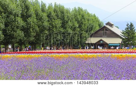 FURANO HOKKAIDO JAPAN - JULY 30 2015: Colorful flower fields with house and tourists in the background at Tomita farm famous tourist attraction of Furano Hokkaido.