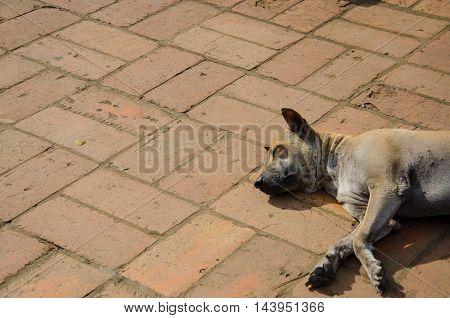 Lone Stray Dog sleeping on ground summer