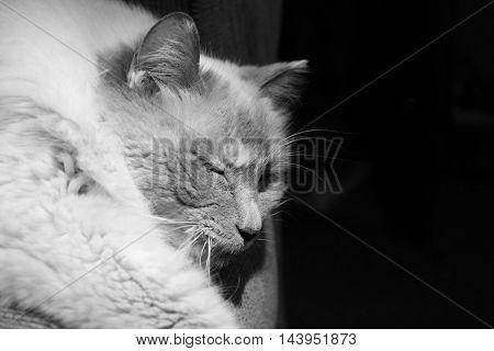 cat sleeping on the lounge