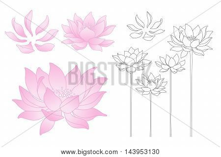 Vector lotus flowers and petals isolated illustration