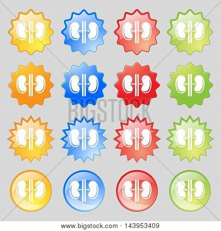 Kidneys Icon Sign. Big Set Of 16 Colorful Modern Buttons For Your Design. Vector