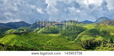 Panorama of tea plantations. Munnar, Kerala, India