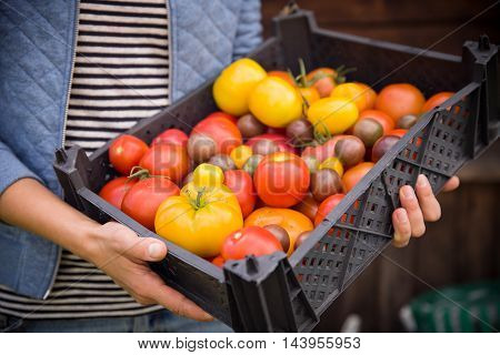 Close-up of woman's hands holding a big box of organic garden vegetables. Harvest in the garden. Healthy food. Yellow and red tomatoes in black box. Person with vegetables. Healthy eating concept.