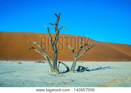 Scenic dried trees among the giant orange sand dunes. The dried lake Deadvlei. Namibia, ecotourism in Namib-Naukluft National Park