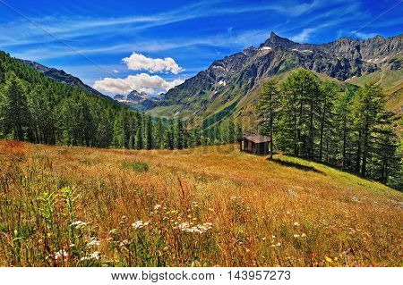 meadow in Alpien mountains with view on Granta Parey
