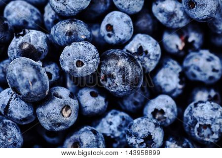 Shot of natural, freshly picked blueberries. Organic, eco friendly food for healthy lifestyle. A lot of berries as background. Selective focus, soft edge, bright deep colors, close-up shot.