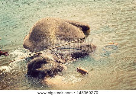 Elepants Bathing In River Sri Lanka, Ceylon