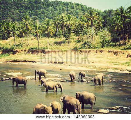 Elephant Family Asia Elephants