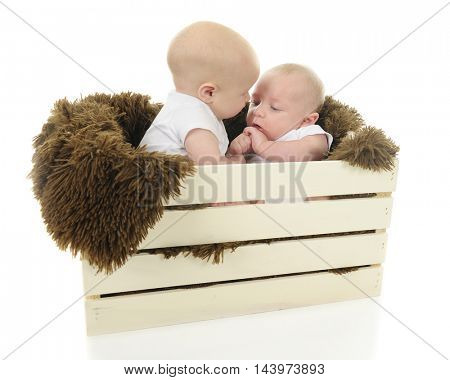 Two baby boys in a blanket-lined wooden crate, one consoling the other.  On a white background.