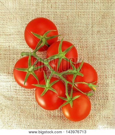 Tomatoes. Fresh, red with twig on canvas.