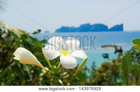 Exotic Paradise Flora and Sea