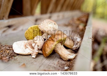 Various Mushrooms On Old Wooden Bench In Autumn Forest