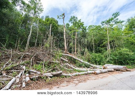 Trees cut down in the forest deforestation or global warming concept environmental issue