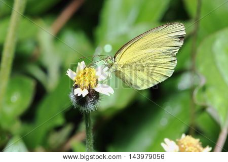 Common butterfly on grass flowers close up