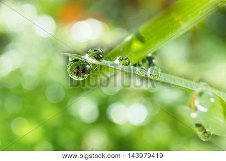 Dew drops on green leaves with bokeh background