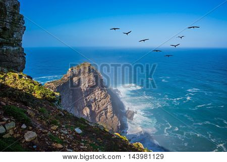 The powerful ocean surf in the Atlantic Ocean. Cape of Good Hope - the most south-westerly point of Africa. Flock of migratory birds at sunset