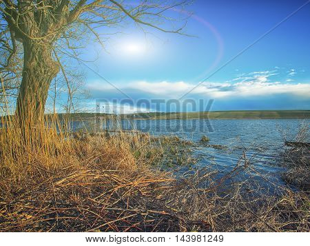 Lake shore and a beautiful cloudscape. Sky and clouds. Branches at foreground