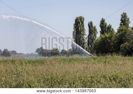 Irrigation Fields