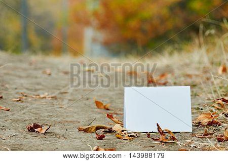 nature, season, white paper sheet on autumn park ground