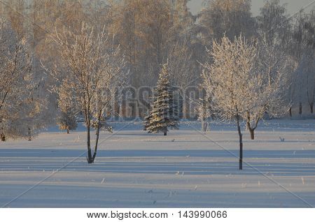 Hoarfrost on autumn grass. hoar frost green grass under autumn sun. colored autumn leaves covered with hoarfrost.