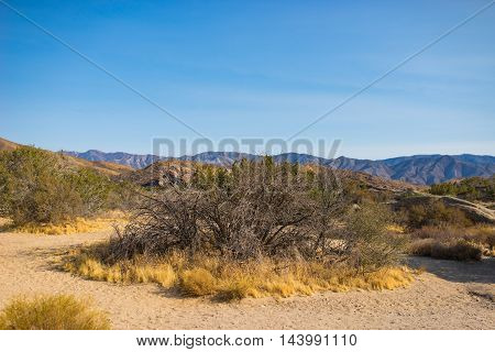 Sand and brush in dry patches of southern California's Mojave desert.