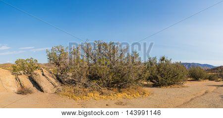 Mojave Desert Wilderness