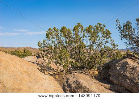 Brush In Boulders