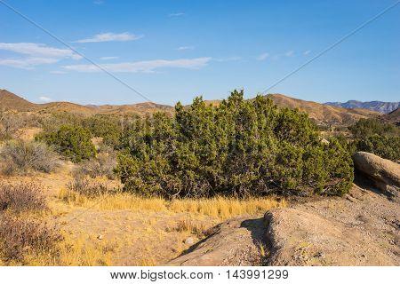 Brush In Desert Wilderness
