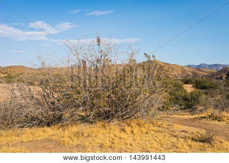 Dry Brush In Mojave Desert