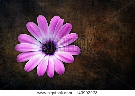 Beautiful pink flower on a brown background, with a nice smell