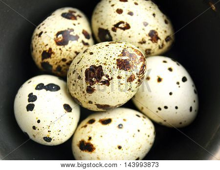 the quail eggs in a brown bowl on wooden surface.