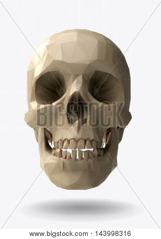 Low poly vector skull front view in 3d realistic look
