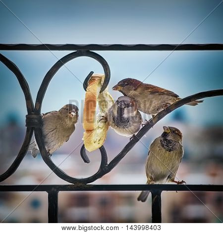 Four Sparrows Eating White Bread on Balcony