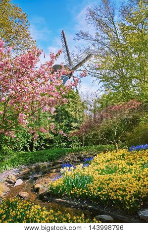 Blooming Garden in the Netherlands at Springtime