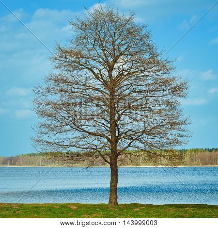 Bare Tree on the Bank of the River