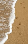 stock photo of paw-print  - Four isolated dog paw footprints in the sand on a beach - JPG