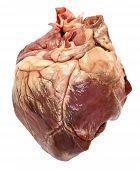 Постер, плакат: Сырье сердце