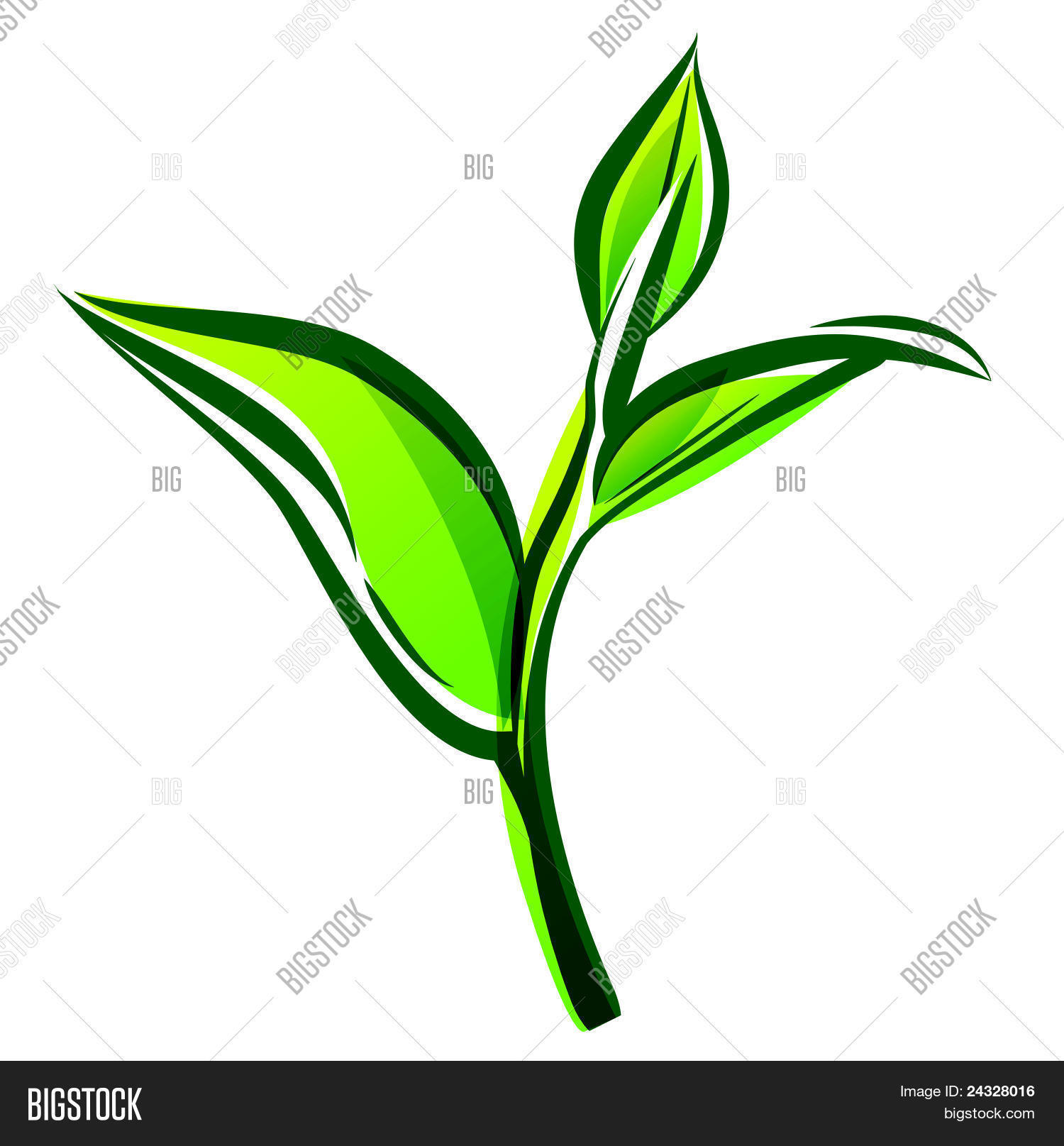 Green Tea Leaf Vector & Photo | Bigstock