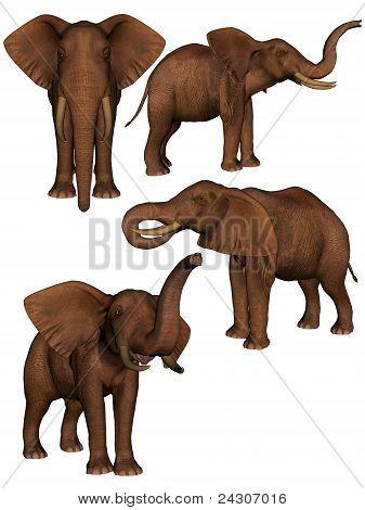 Set Of Four Elephants.