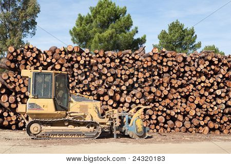 Pine firewood stacked in a pine forest and bulldozer