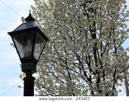 Street Lamp Shippensburg, Pa