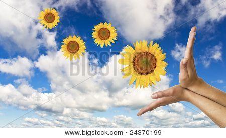 mãos com um girassol